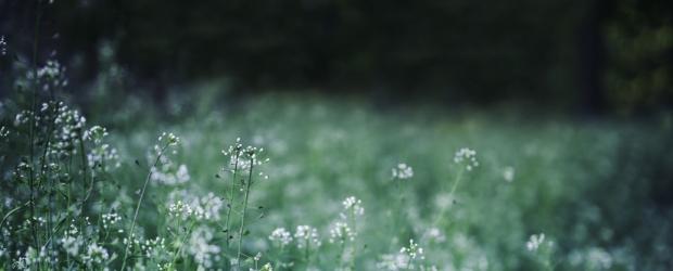 flowers-meadow-spring-green-large.jpg